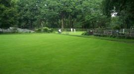 Lawn Picture Download