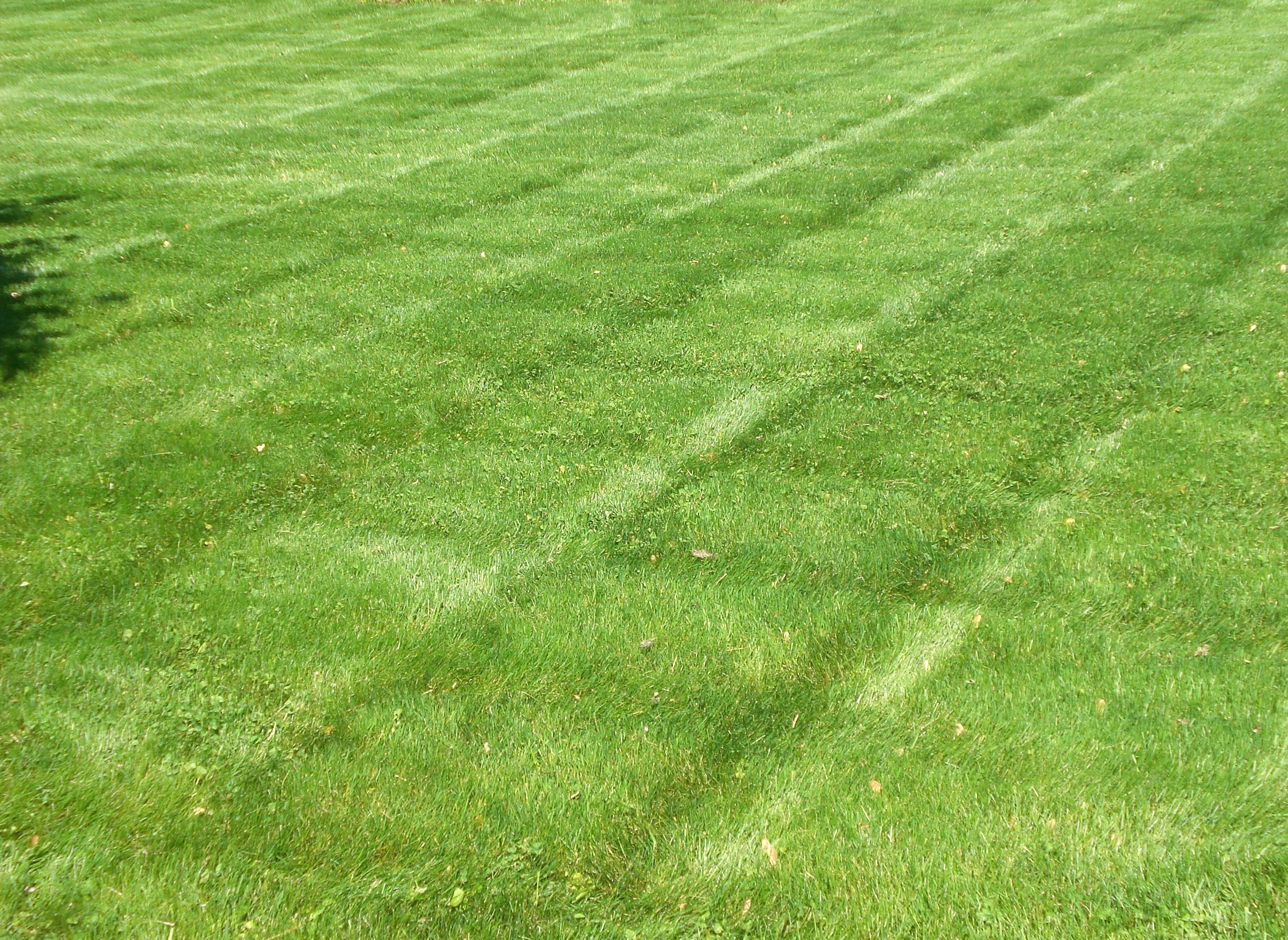 Lawn Wallpapers High Quality Download Free