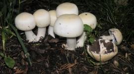 Mushroom Glade Photo Free