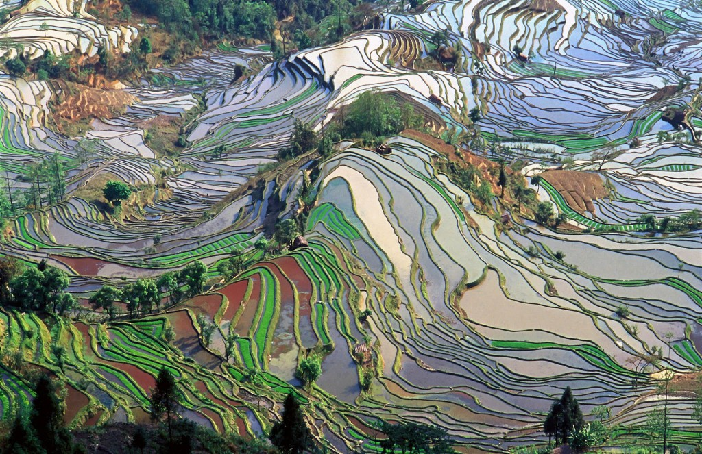 Rice Terraces wallpapers HD