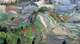 Rice Terraces Best Wallpaper