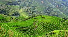 Rice Terraces Photo Download