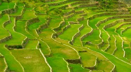 Rice Terraces Photo Free