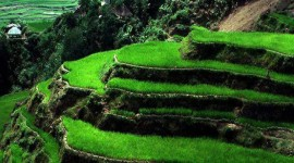 Rice Terraces Photo#1