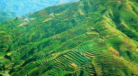 Rice Terraces Photo#3