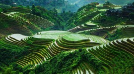 Rice Terraces Wallpaper Full HD