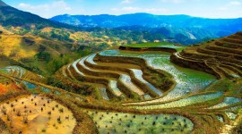 Rice Terraces Wallpaper Gallery