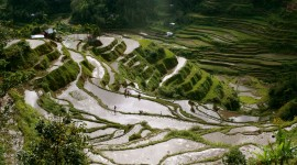 Rice Terraces Wallpaper HQ#2