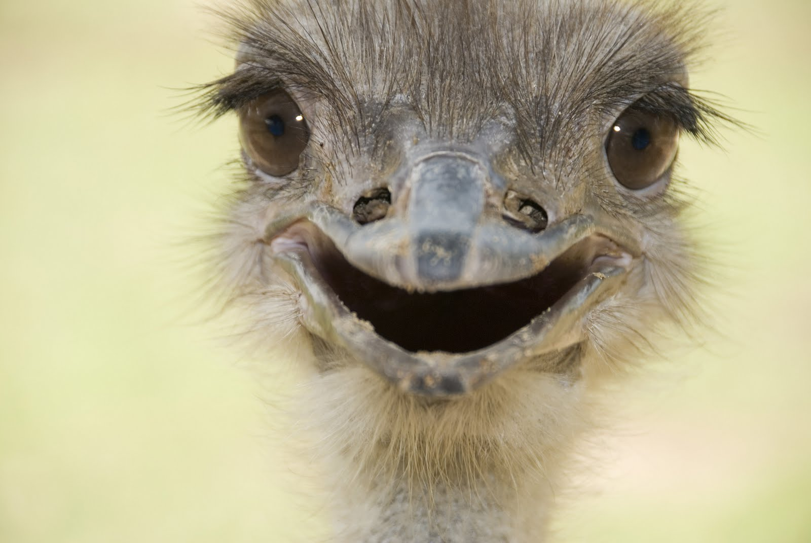 The 30 Happiest Animals In The World That Will Make You