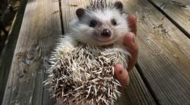 Smiling Animals Wallpaper Free