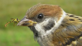 Sparrow Photo Download