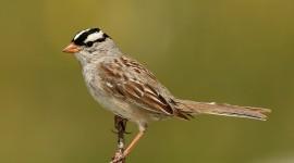Sparrow Photo Free