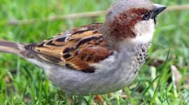 Sparrow Photo#1
