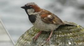 Sparrow Photo#2