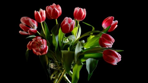 Tulips In A Vase wallpapers high quality