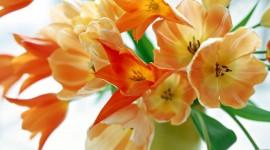 Tulips In A Vase Pics