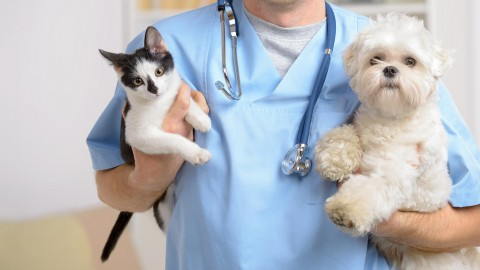 Veterinarian wallpapers high quality