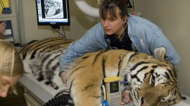 Veterinarian Photo Download