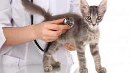 Veterinarian Wallpaper Gallery