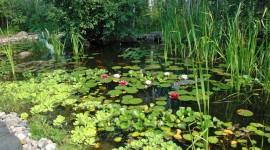 Water Plants Photo#1