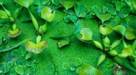 Water Plants Wallpaper Download