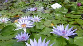 Water Plants Wallpaper For Android