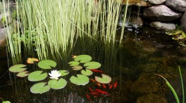 Water Plants Wallpaper For IPhone#1