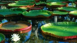 Water Plants Wallpaper Free