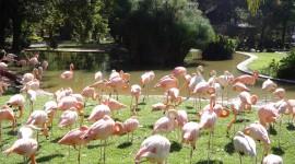 Zoological Garden Wallpaper Gallery
