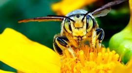 4K Bees Best Wallpaper