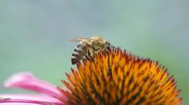4K Bees Desktop Wallpaper