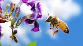 4K Bees Desktop Wallpaper For PC
