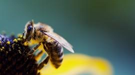 4K Bees Desktop Wallpaper HD