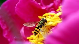 4K Bees Photo#1