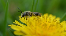 4K Bees Photo#2