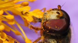 4K Bees Wallpaper