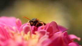 4K Bees Wallpaper Download