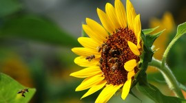 4K Bees Wallpaper Download Free