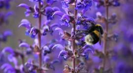 4K Bees Wallpaper HQ#1