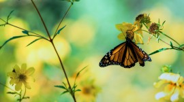 4K Butterflies And Flowers Photo#1