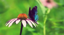 4K Butterflies And Flowers Wallpaper Gallery