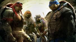 4K Ninja Turtles Photo Download