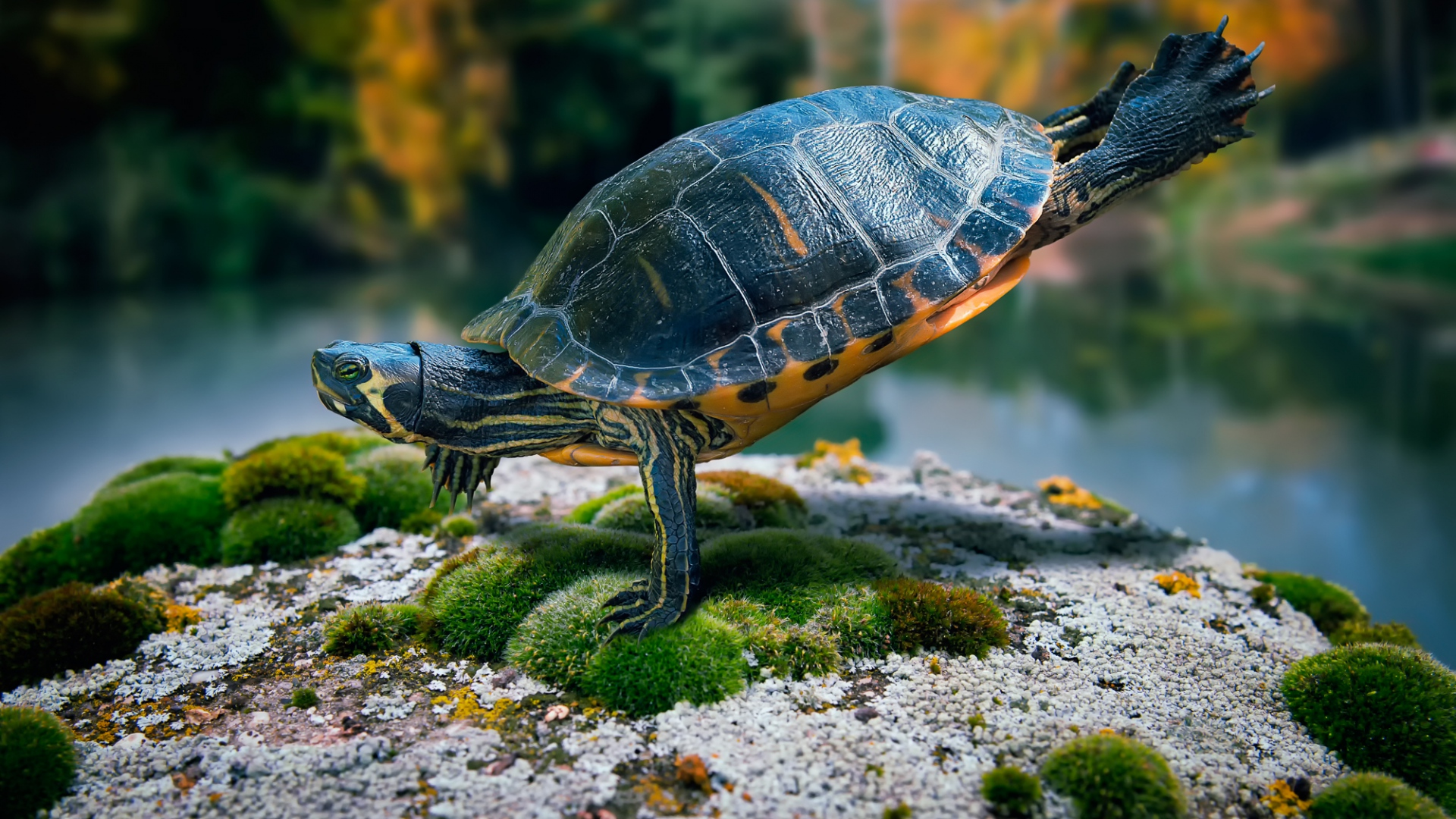 4k turtles wallpapers high quality download free