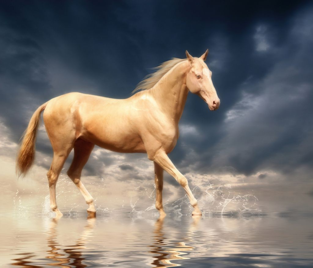 akhal teke horse wallpaper - horse and lion photos