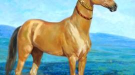 Akhal-Teke Horse Wallpaper For Mobile