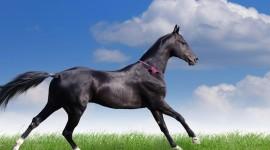 Akhal-Teke Horse Wallpaper HQ