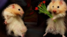 Animals And Flowers Best Wallpaper