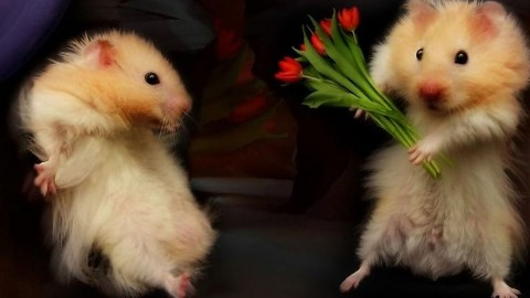 Animals And Flowers wallpapers high quality
