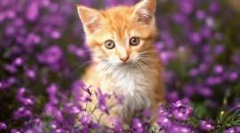 Animals And Flowers Desktop Wallpaper