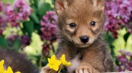 Animals And Flowers Desktop Wallpaper HD